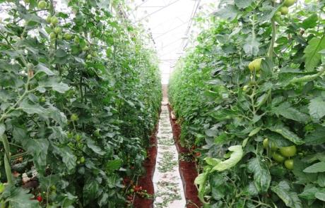 front & farm